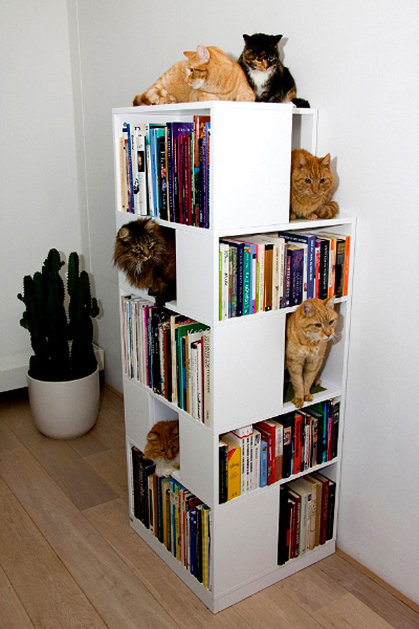 The CatCase Mixes Bookcase Cat Tree And Feline Fun