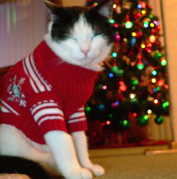 Shudder at These Pictures of Cats Wearing Ugly Holiday