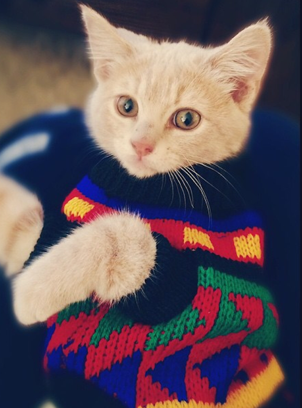 Shudder at These Pictures of Cats Wearing Ugly Holiday Sweaters ...