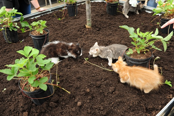 Bon As Part Of Purinau0027s Paws For The Planet Initiative, Similar Gardens At  Other Canadian Shelters Are Set To Open This Summer In British Columbia,  Nova Scotia, ...