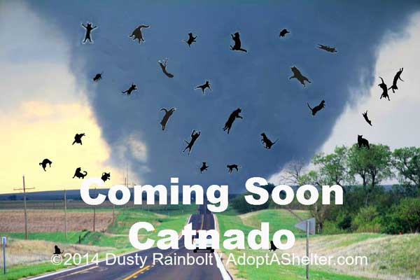 "Coming Soon to TV: ""Catnado"""