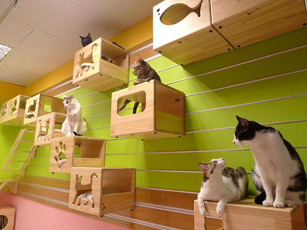 CatsWall.jpg