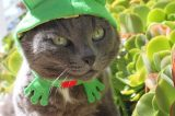 Catster Interview: We Talk to the Cat Clothing Experts at Cushzilla