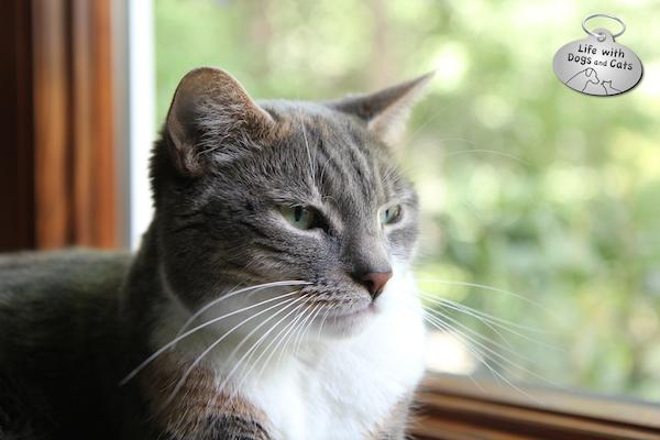 Introducing Haiku by Cat: Poetry Created by Kitties