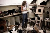 Is Cat Rescue an Addiction?