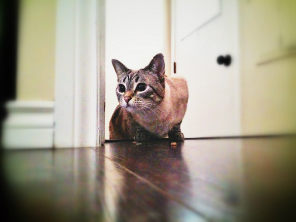 A cat in an open doorway.
