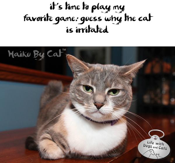 Haiku-by-Cat-Dawn-guess-why-cat-is-irritated