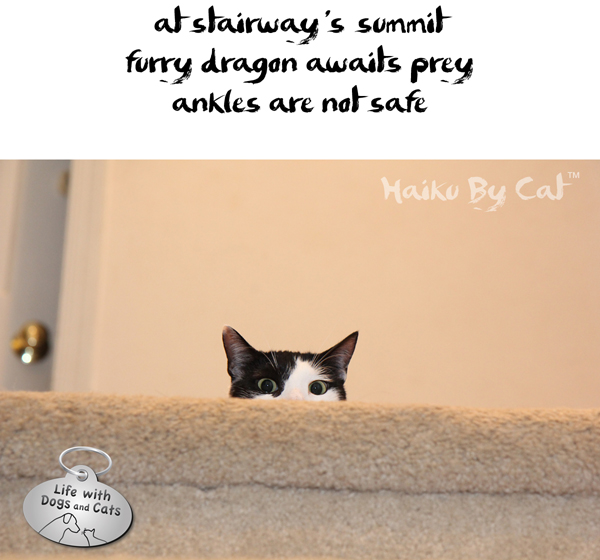 Haiku by Cat: Sweet, Adorable, and Possibly Dangerous