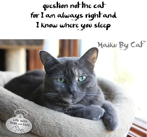 Haiku-by-Cat-question-not-Athena