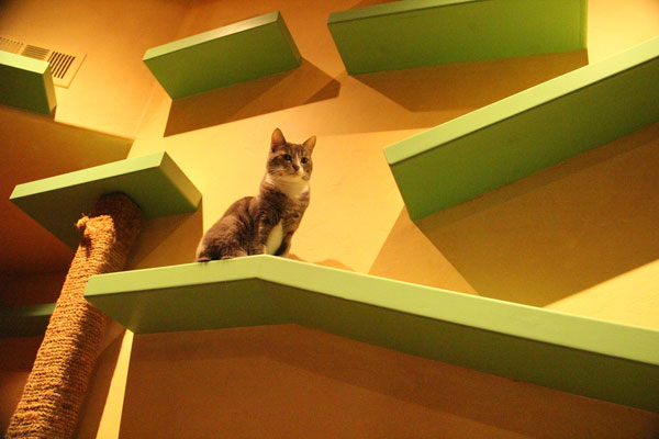 Tunnels connect rooms throughout the house and brightly colored perches r&s and custom climbing poles add a flowing artistic theme. Toss 18 cats into ... & House of Nekko: How My Friend Made His Home a Cat Paradise - Catster