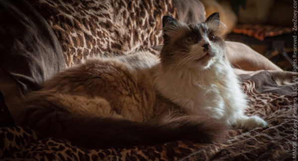 Let's Talk: How Are Your Cat's Routines Affected After a Big Change at Home?