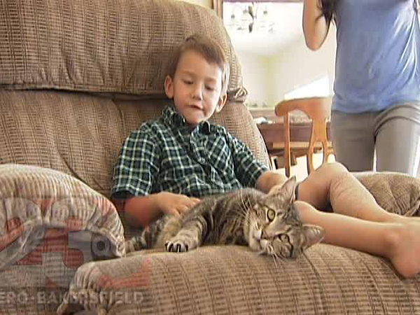 A Family Cat Saves a Boy from a Dog Attack in This Video