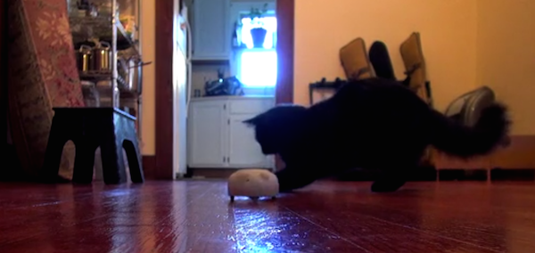 We Interview a Creator of Mousr, the World's First Artificial Intelligence Cat Toy