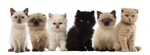 how to litter train a kitten again