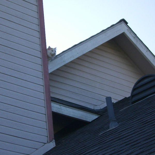 A cat on a roof.