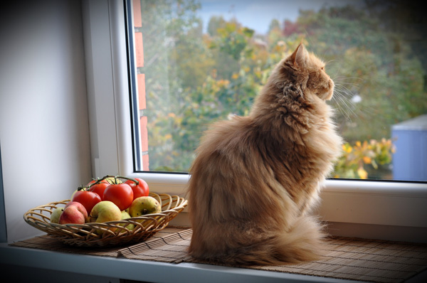 Image result for cat by a window