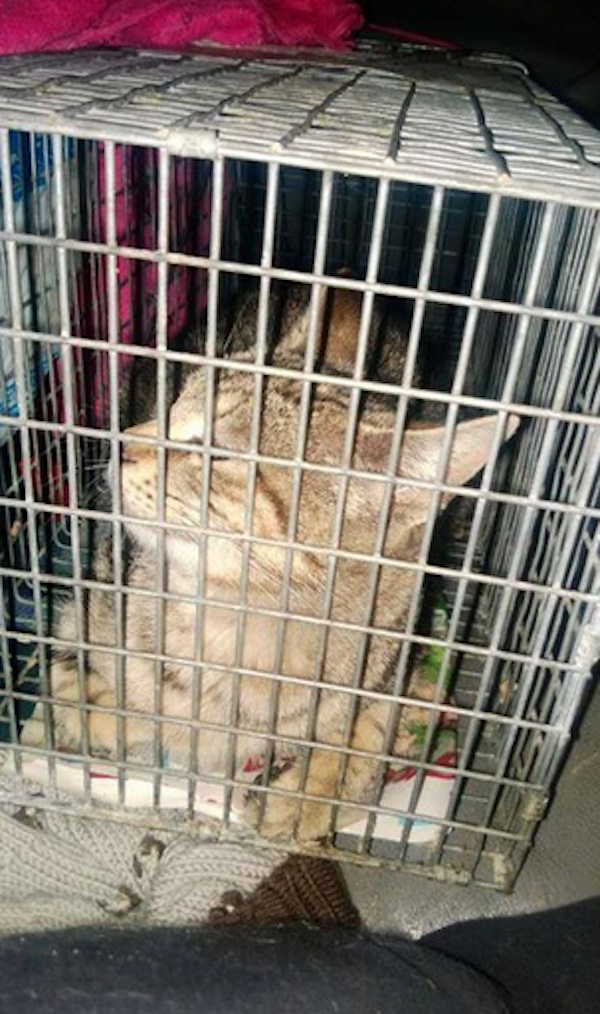Update: The Craigslist Cat Abandoned in a Brooklyn Building Is with