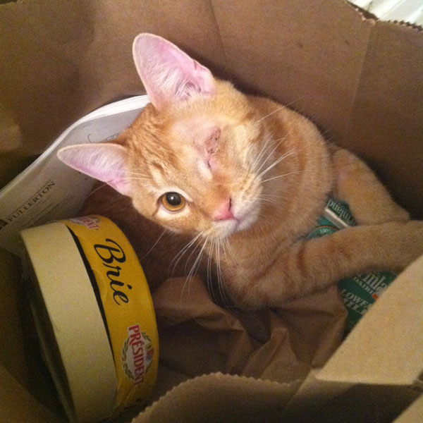 Why I Returned My Adopted Kitten To The Shelter