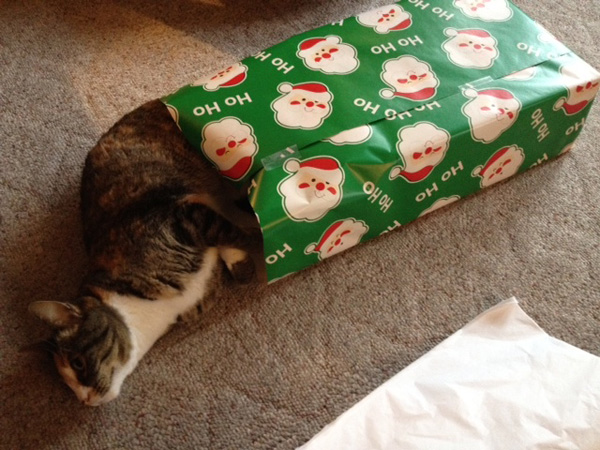 i know im preaching to the choir when i tell you its next to impossible to wrap gifts without attracting every cat in the house - How To Wrap A Cat For Christmas