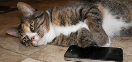 20 Texting Abbreviations Your Cat Would Use Catster