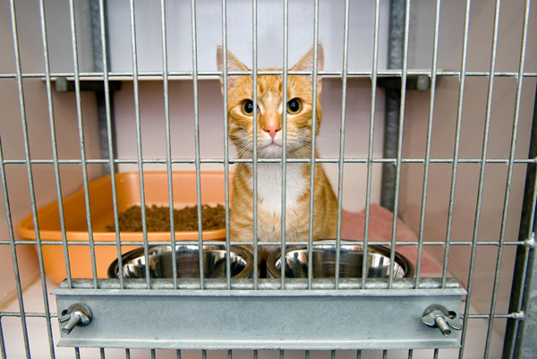 An orange tabby cat in a cage at a shelter.