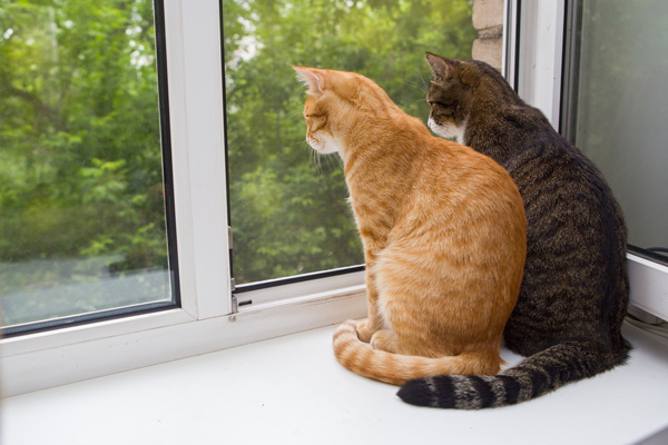Two cats sitting together and looking out of a window.