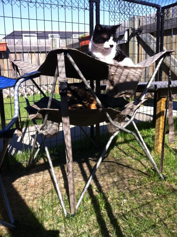 Exceptionnel And Every Year, Dawnwastaken And Her Husband Update The Catio With New  Furniture, Taking Time To Mend Anything That Requires Repair.