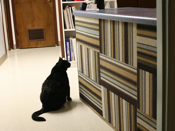 Save Space In Style With These Wall Mounted Cat Scratchers