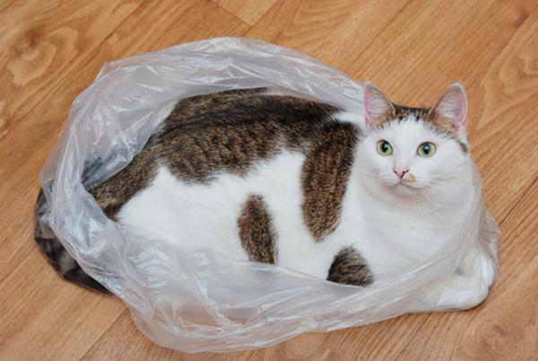 cats licking plastic bag best plastic 2018
