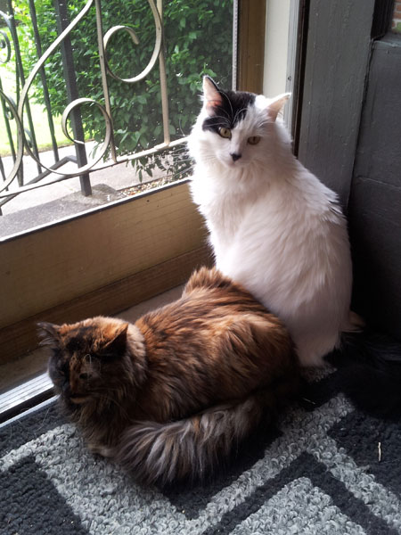 My Cat Is Living with FIP, Which Is a Death Sentence - Catster