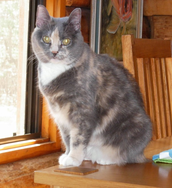 7 Years Later Utah Cat Returned To Owners