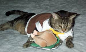 Tabby has gone for traditional Pilgrim attire above but ate so much turkey she canu0027t get up. Make sure your costumes have enough room to accommodate a big ... & Thursday Thirteen: 13 Kitty Costume Ideas for Thanksgiving - Catster