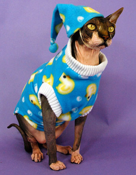 ... and offers fanciful apparel costumes and accessories (like the catu0027s pajamas!) alongside clothing options for special-needs kitties. & Cat Chic: 10 Furrocious Feline Fashion Designers - Catster