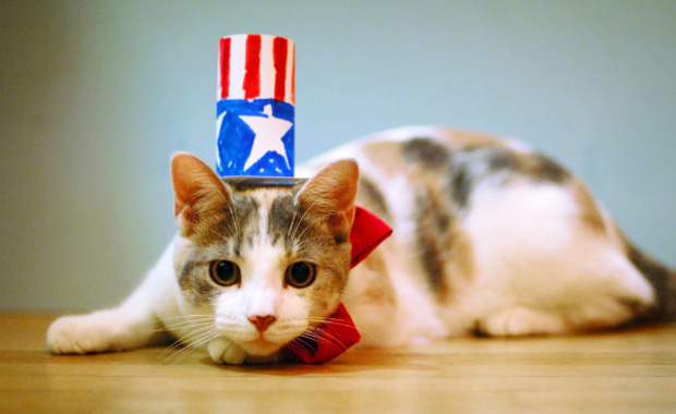5 Ways to Keep Your Cat Calm This Fourth of July - Catster