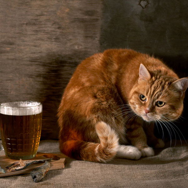 Can Cat Have Beer