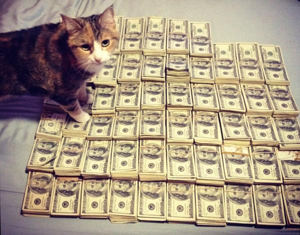 cash-cat-2.jpg