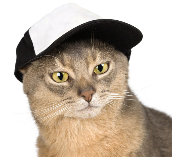 Baseball is as American as tuna fish. Abyssinian in baseball cap  by Shutterstock