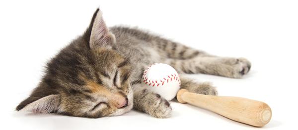 The bottom of the first inning. Kitten sleeps on baseball bat  by Shutterstock