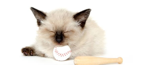 It's 0-0 in the third, and there's still hours upon hours of baseball left. Kitten sleeping on baseball by Shutterstock