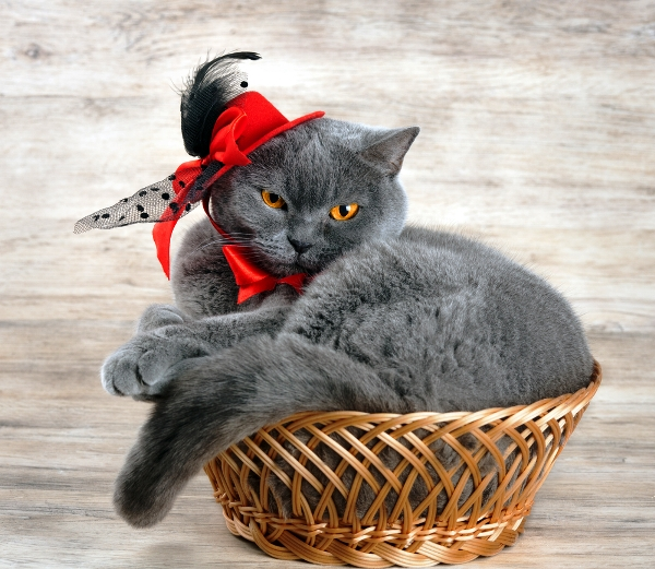 A cat dressed up and being silly in a basket.
