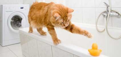 Is Your Cat Bathroom Buddy