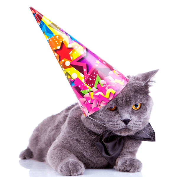 Cat Birthday Hat How To Throw A Party For Your