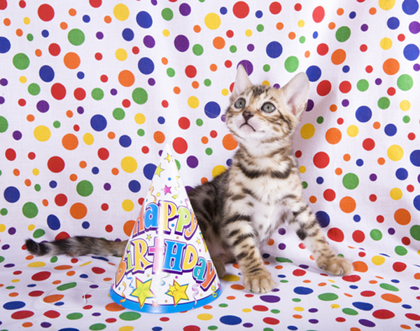 cat-birthday-shock.jpg