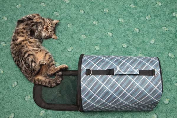 98922c2178 And recently, I've found that using my cat carriers creatively has helped  to simplify life.