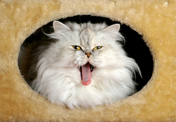 Does Your Cat Vomit Frequently? Guess What: That's Not