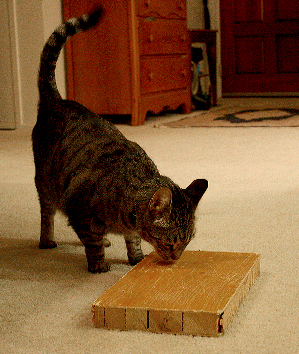 Let's Talk: Does Your Cat Use a Kitty Door?