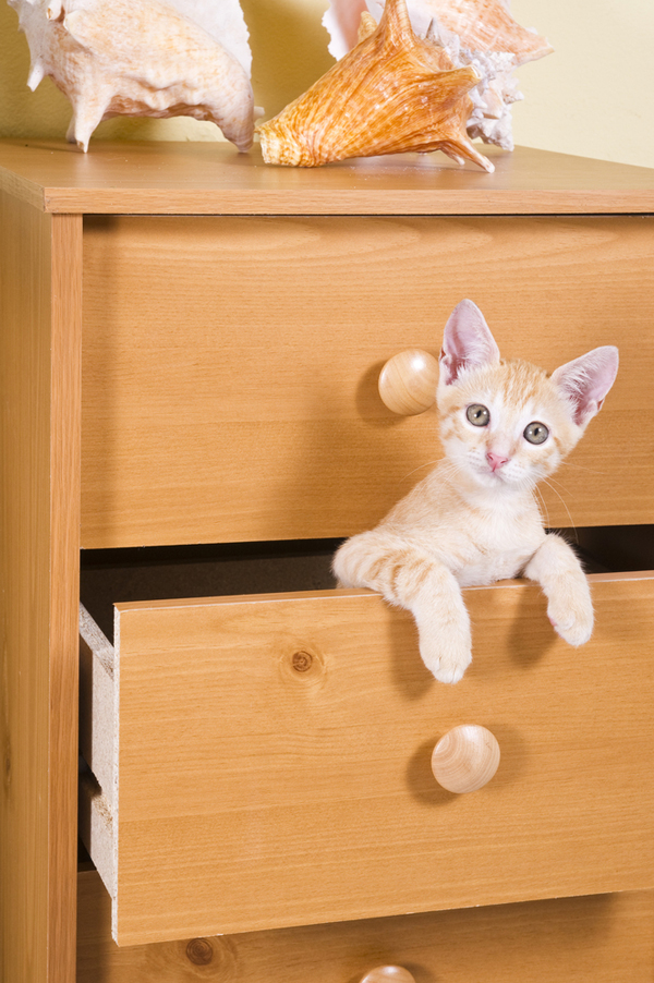 5 Ways Kids And Adults Can Help Keep Indoor Cats Safe
