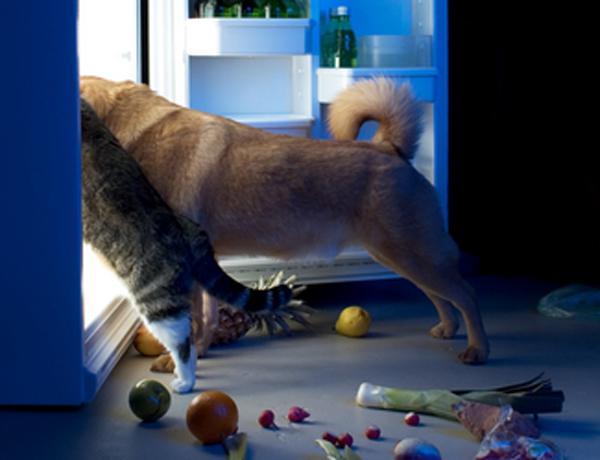 Dog Like To Eat Snacks But Not Dog Food