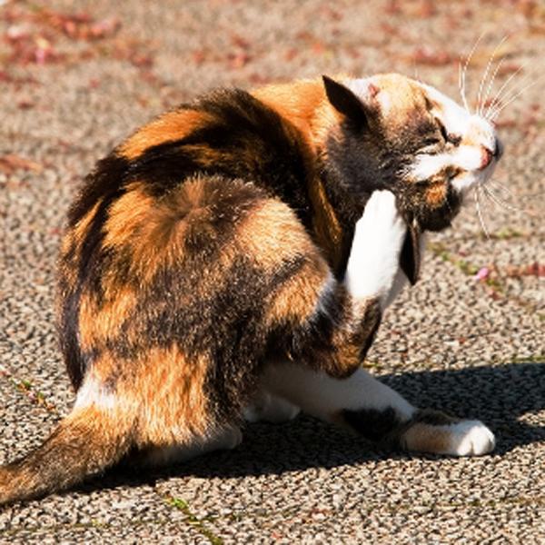 cat-flea-med-no-work-IMAGE.jpg