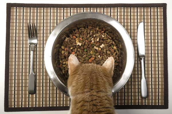 Cat eating by Shutterstock